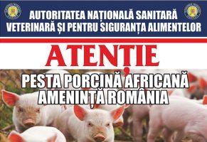 Pestă Porcină Africană!